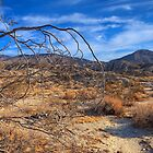 Bone Dry (Anza Borrego State Park, California) by Brendon Perkins