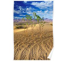 Life in Death Valley (Death Valley, California) Poster