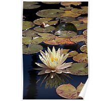 Mission Fountain Water Lily (San Juan Capistrano Spanish Mission, California)  Poster