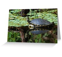 Pensive cooter reflecting Greeting Card