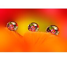 Rose and daisy drops Photographic Print