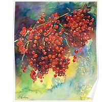 Currants Berries watercolor painting #2 Svetlana Novikova Poster
