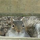 These are not the nuts you are looking for. by Paul Revans