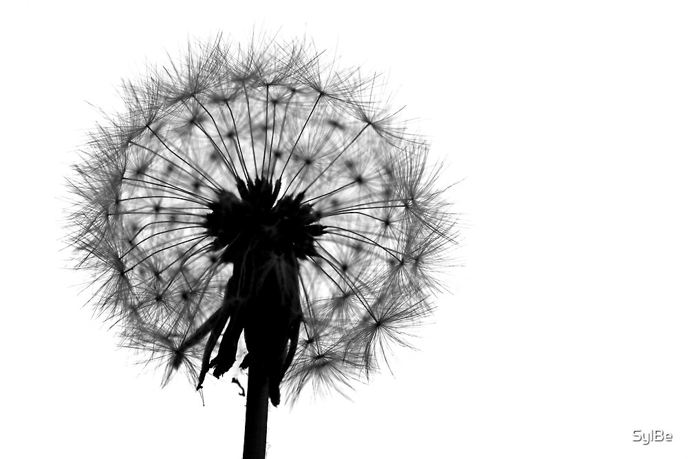 Dandelion silhouette by SylBe