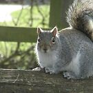 Sun soaked Squirrel by Paul Revans