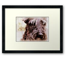 a little grey never hurt anyone Framed Print