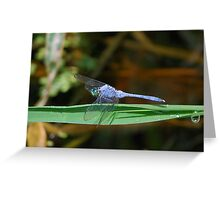 Blue dragonfly on a blade Greeting Card