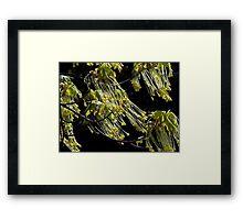 Maple Tree Tassels Framed Print