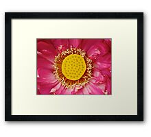 Water Lily 11 Framed Print