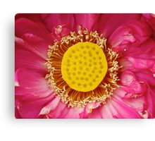 Water Lily 11 Canvas Print