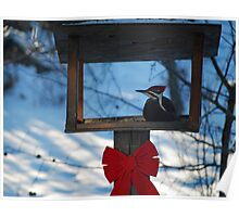 Pileated Woodpecker in the Feeder Poster