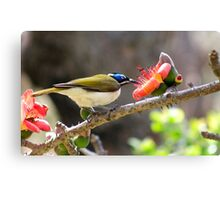 Reaching out for nectar Canvas Print