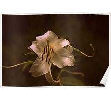 Bygone Lily Poster