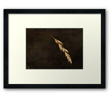 Janet Lee Photography 2011 Framed Print
