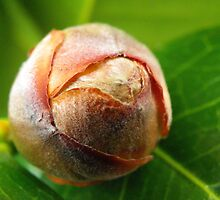 This Bud's for You by Kate Eller