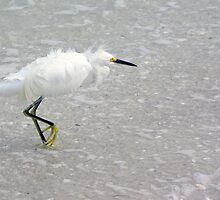 Egret In Wind by Karen Checca