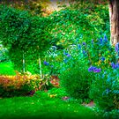 The Lovely Garden by Monica M. Scanlan