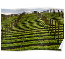 Marlborough Vineyard Poster