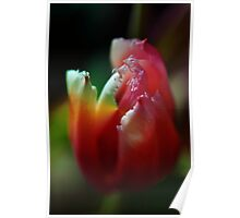 Altered tulip 2 Poster