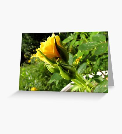 A Rosy Shade of Yellow Greeting Card