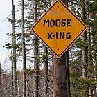 Moose Crossing by Joe Jennelle
