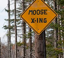 Moose Crossing by Joe Jennelle