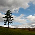 Tree and Clouds by Joe Jennelle