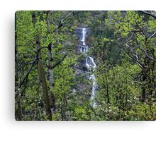 Waters in the Forest Canvas Print
