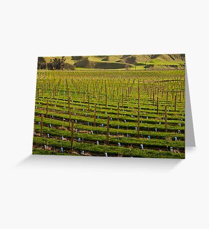 Marlborough Vineyard 2 Greeting Card