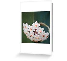 Hoya... Greeting Card