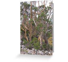 Snowgums at Cradle Mountain - Tasmania Greeting Card