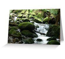Creek on St Columba Falls Track - Tasmania Greeting Card