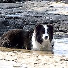 Ollie........this spa pool needs heating.......! by Roy  Massicks