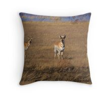 Prairie Stare Throw Pillow