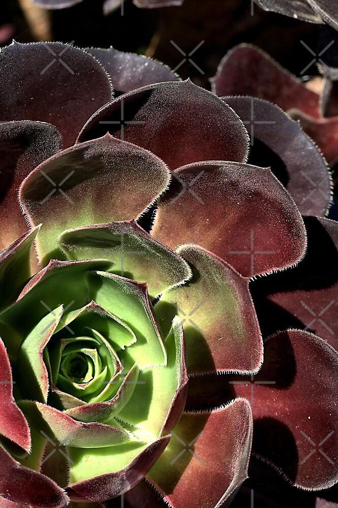 Going Cactus  by Joy Watson