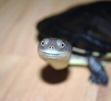 turtle by FracturedJack
