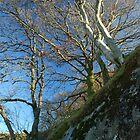 On the Mawddach Trail No1 by StephenRB