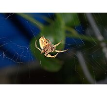 Weaving a web Photographic Print