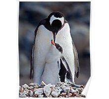 Lullaby (Gentoo Penguin & Chick, Port Lockroy, Antarctica) Poster