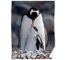 Lullaby (Gentoo Penguin & Chick, Port Lockroy, Antarctica) Poster