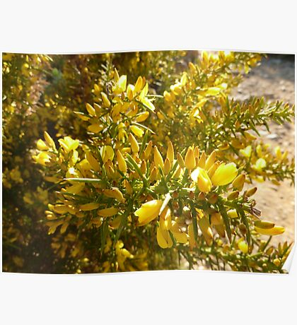 Yellow buds Poster