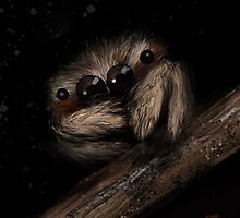 Jumping Spider by © Karin Taylor