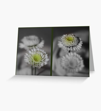 Double Daisies Greeting Card