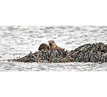Otters, Mull, Scotland Photographic Print