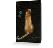 little tiger, waiting Greeting Card