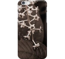 Pokeweed Blossoms iPhone Case/Skin