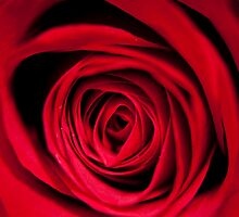 rose by reich
