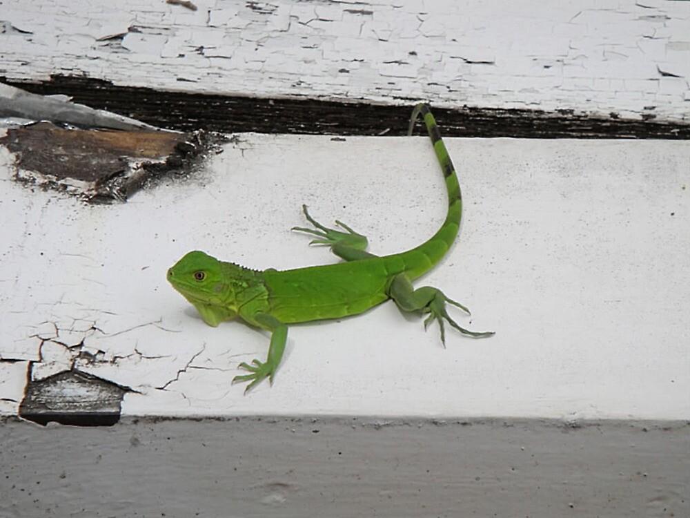 Iguana  by islefox