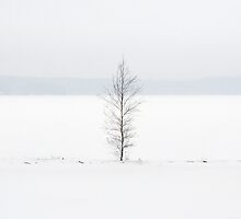 One birch tree by Toni Holopainen