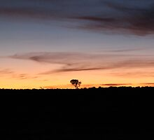 The Lone Tree, Nullarbor! by Cheryl Parkes